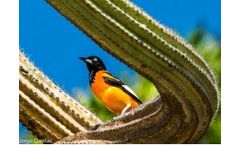 Cool Farm Biodiversity metric comes to the tropics and dry shrublands