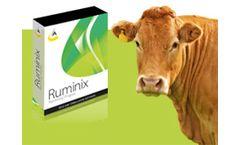 Ruminix - Ration Balancer Software