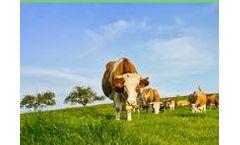 Gro2Max - Cattle Probiotic