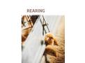 Rearing Brochure