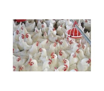 Facco - Poultry Floor Management Systems