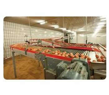 Lubing - Curve Conveyors for Egg Transport