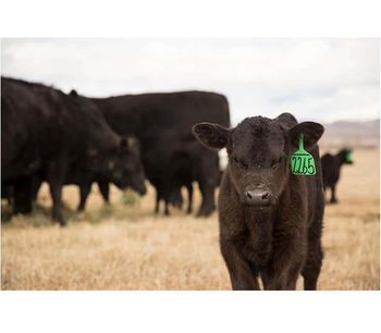 Alltech - Organic Trace Minerals for Beef Cattle