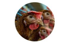 Environmental Control Solutions for Poultry