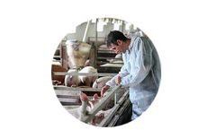 Environmental Control Solutions for Swine