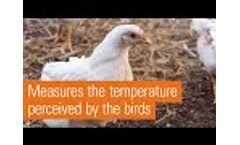 Innovative Feel-Good Sensor for Broiler Growing | iDOL 120 - Video