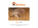 PureLine Practical Solutions for Animal-Friendly and Sustainable Pig Production - Brochure