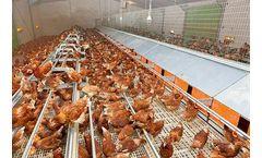 Big Dutchman - Poultry Floor Plastic Slats