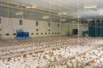 HeatMaster - Hot-Water Convection Livestock House Heater