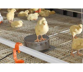 IncasCompact - Bird Weighing System