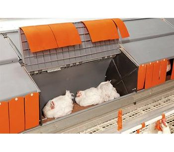 Nesca - Poultry Scale for Broiler Breeders