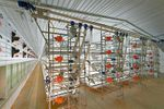 AviMax - Sliding Broiler Colony System