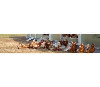 NATURA - Model Camp II - Mobile Poultry Housing System