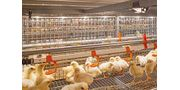 Flexible Tube Lamp - Poultry Production