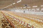 FlexLED - Model HO - LED Tube Lamp - Poultry Production