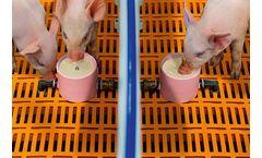 CulinaCup - Suckling Pig Feeding Systems