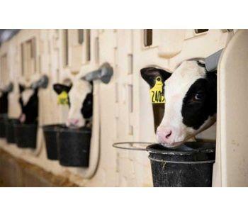 Create Lifelong Immunity Starting with the Calf