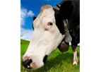 DVM TempTrack - Automatic Livestock Health Monitoring Systems
