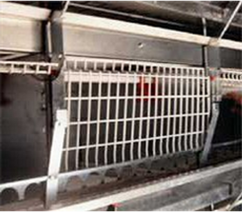 Quad Deck - Pullet Cage System
