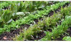 Culbac - All-Natural Biostimulant for Plants