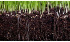Culbac - All-Natural Biostimulant for Improved Seedling Vigor