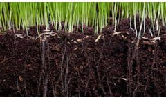 Culbac - Commercial Seed Treatment All-Natural Biostimulant for Improved Seedling Vigor