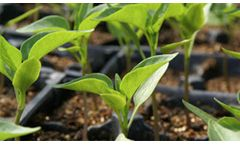 Culbac Green - Dry Seed Treatment All-Natural Biostimulant for Improved Seedling Vigor