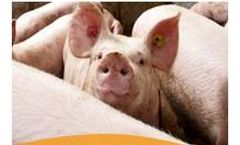 Total Automation for Pig Farming