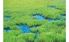 US to improve wetland mitigation with better monitoring