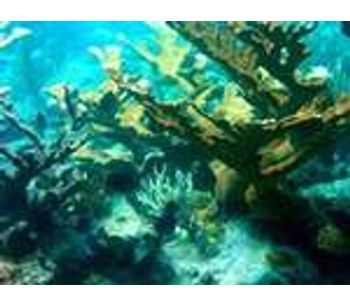 USGS Undertakes Additional Studies of Reef Damage in Gulf of Mexico to Assess Cause