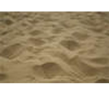 Beach sand often more contaminated than water