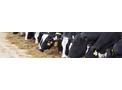 Promega - Model P 4400 - High Performing Dairy Diet