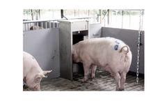First semen collection of Dutch Toggenburg goat in the Dutch gene bank