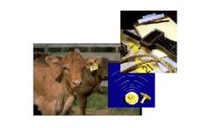Cow Sense - Version EID - Individual Animal Sorting Management Software
