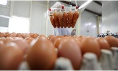 New Regulations in Effect for U.S. Egg Producers