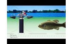 Part 2: Cyanobacteria (Blue-Green Algae) Control Mechanisms -White Board Series Everything Lake Video