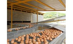Alaso - Poultry Egg Conveyors