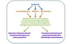 Detailed Introduction to the Four Effects of Probiotics