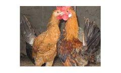 CEN-Se - Selenium Yeast for Animal Feeding