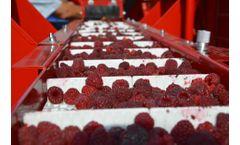 KAREN blueberry, blackberry and raspberry harvester - Video