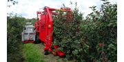 Sour, Cherries and Plums Harvester