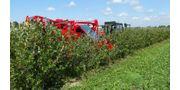 Half-Row Berry Harvester