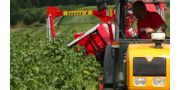 Half-Row Currant and Berry Harvester