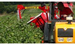 Weremczuk - Model JOANNA-4 - Half-Row Currant and Berry Harvester