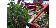 Currant and Berry Harvester