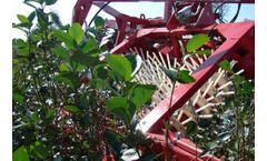 Weremczuk - Model JOANNA TRIPLEX - Currant and Berry Harvester