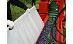 Weremczuk - Model MAJA - Sour, Cherries and Plums Shaking Machine