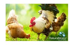 Pig and Poultry Drinking Water Chlorine Dioxide Treatment