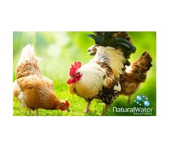 Pig and Poultry Drinking Water Chlorine Dioxide Treatment - Agriculture - Poultry