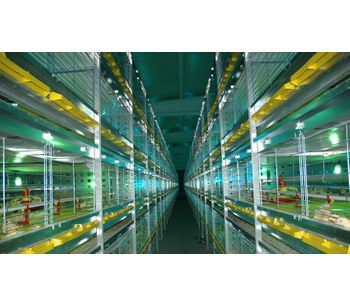 HIZCO - Broiler Cage System
